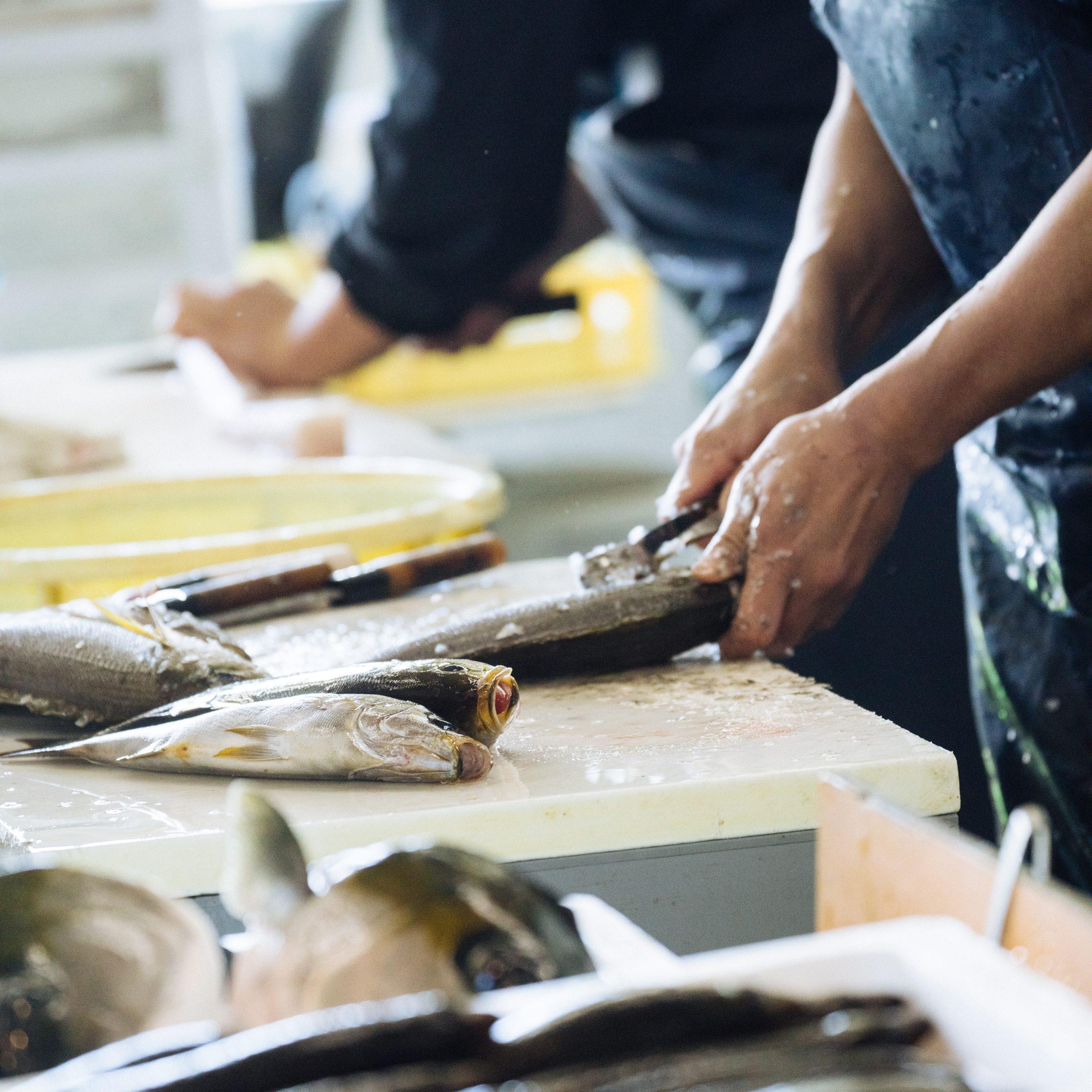 魚をさばいている画像